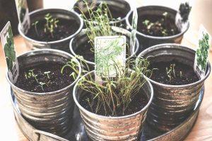 huerta de plantas aromaticas en casa zoko